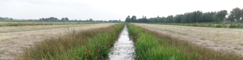 Inrichting robuuste natuur in polder Oukoop van start