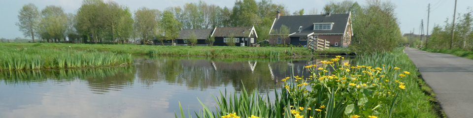 Steeds meer dotterbloemen in polder Oukoop