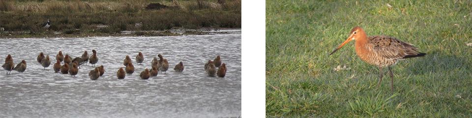 Wordt het een goed weidevogel jaar in polder Oukoop?