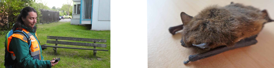 Seizoen vleermuisonderzoek Watersnip van start met instructieochtend